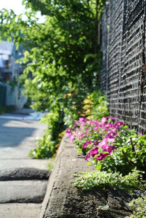 Fleurs de la ruelle verte - le raccourci
