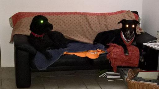 Amir und Luke auf dem Sofa - Nachtgespenster