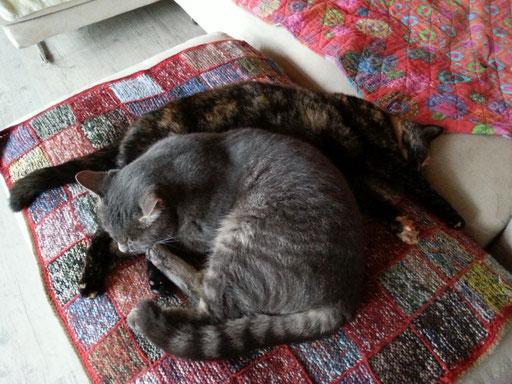Katzengeschwister, die sich mögen