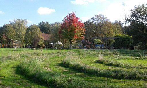 Spirale und Ahorn in Herbststimmung