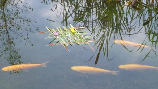 Die Fische sind neugierig - ob das wohl für sie ist?