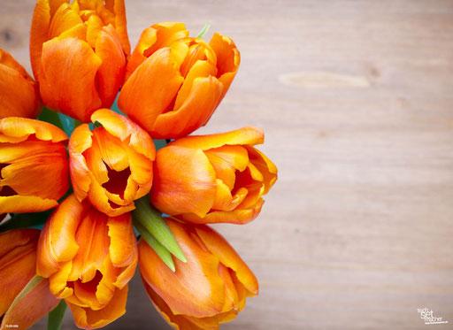 """""""Orangene Tulpen"""" SKU: 16_09_006"""