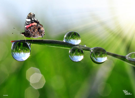 """""""Mini-Schmetterling"""" SKU: 16_62_002"""