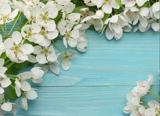 """Kirschblüten auf Holz"" SKU:  19_09_110"