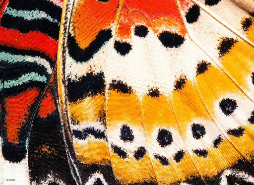 """""""Schmetterlingsflügel mit Punkten"""" SKU: 16_62_003"""