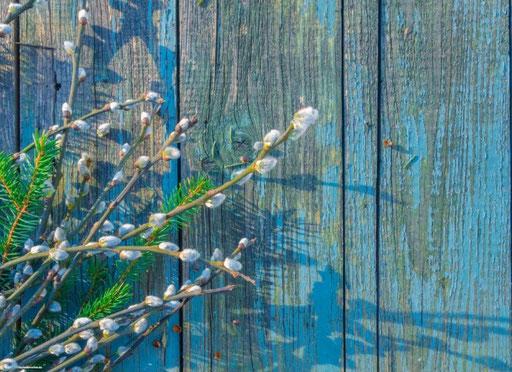 """""""Weidenkätzchen auf blauem Holz"""" SKU: 19_09_111"""