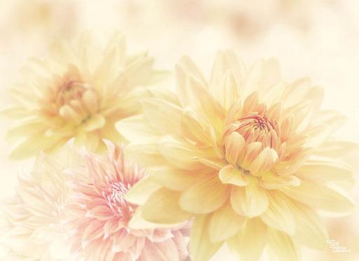 """Blütenzauber"" SKU: 16_64_006"