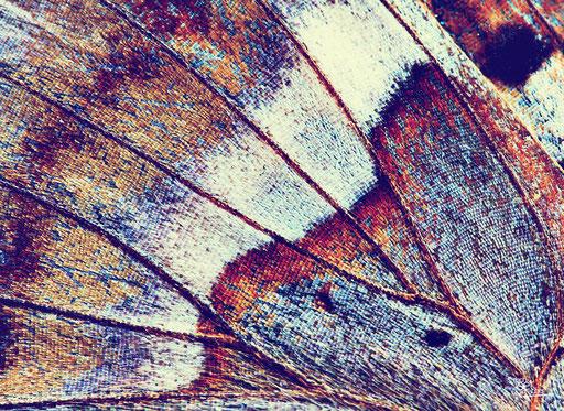 """""""Schmetterlingsflügel bunt"""" SKU: 16_62_004"""