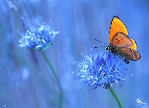 """Orangener Schmetterling"" SKU: 16_62_001"