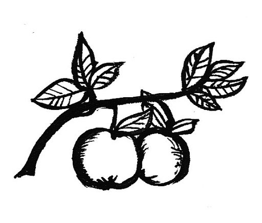 evapils illustration