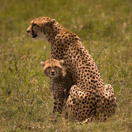 La petite Toto (Masai Mara, Kenya) - 2010