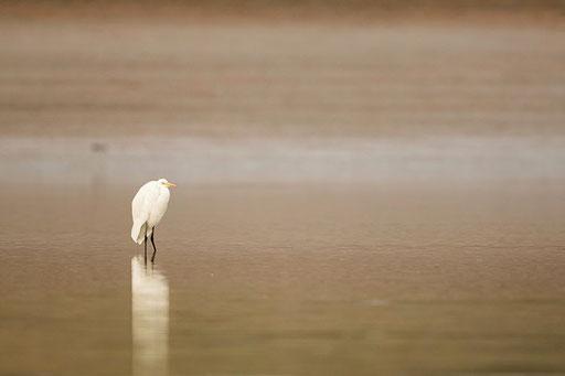 Ambiance... (Satpura, Inde)