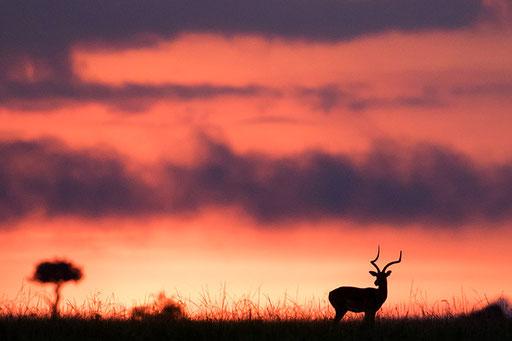 Lever du soleil (Kenya)
