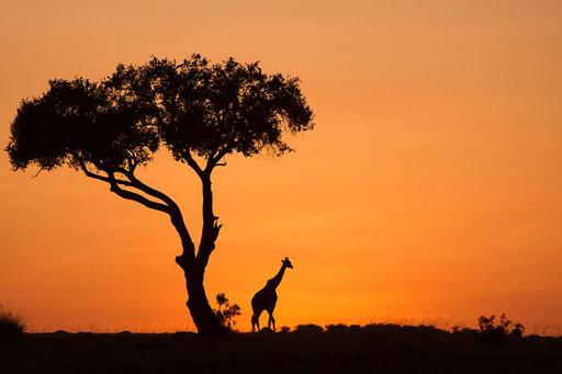 Lever de soleil (Masai Mara, Kenya)