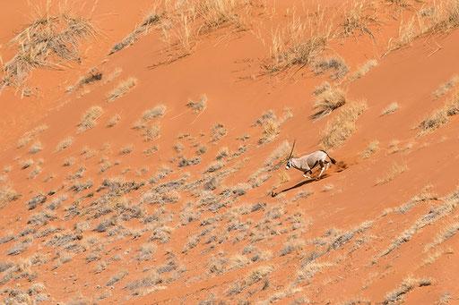 Oryx dans les dunes - Sossusvlei (Namibie)