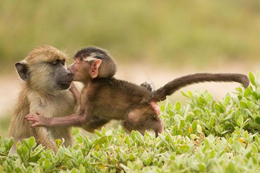 Je t'aime frangin (Tsavo Ouest - Kenya)