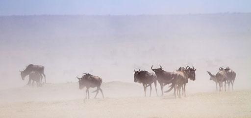 Ambiance... (Masai Mara, Kenya)