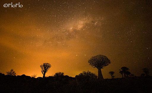 Forêt d'arbres à carquois - Keetmanshoop (Namibie)