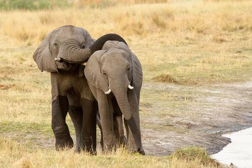 Les deux copains... (Horse Shoe, Namibie)