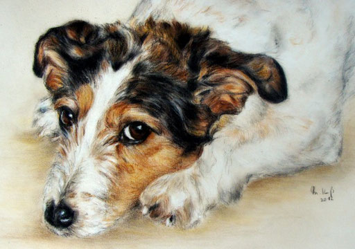 Terrierportrait, Hundeportrait