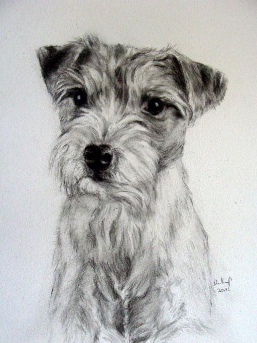 Hundezeichnung  mit Bleistift gezeichnet