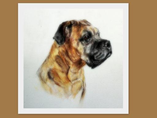 Boxer. Hundezeichnung in 13 x 13 cm gezeichnet.