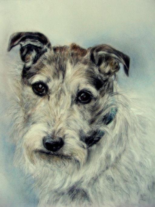 Hundportrait, Kopfzeichnung