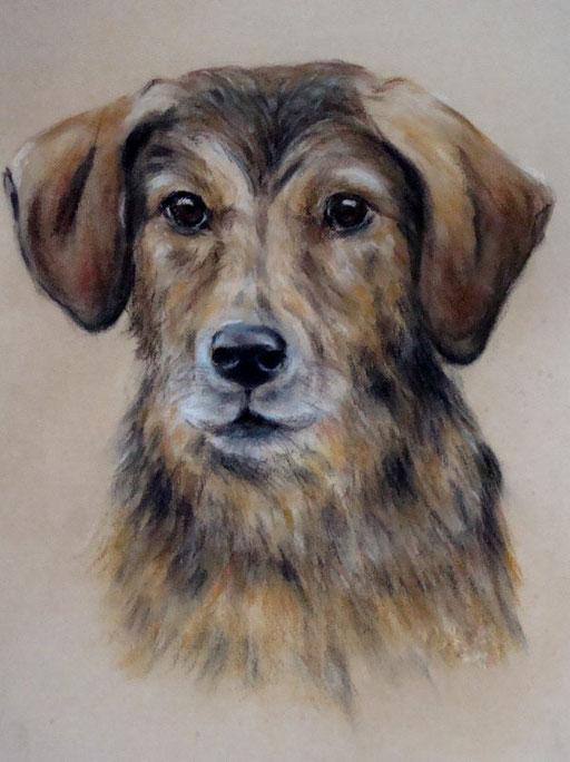 Hundekopf gezeichnet