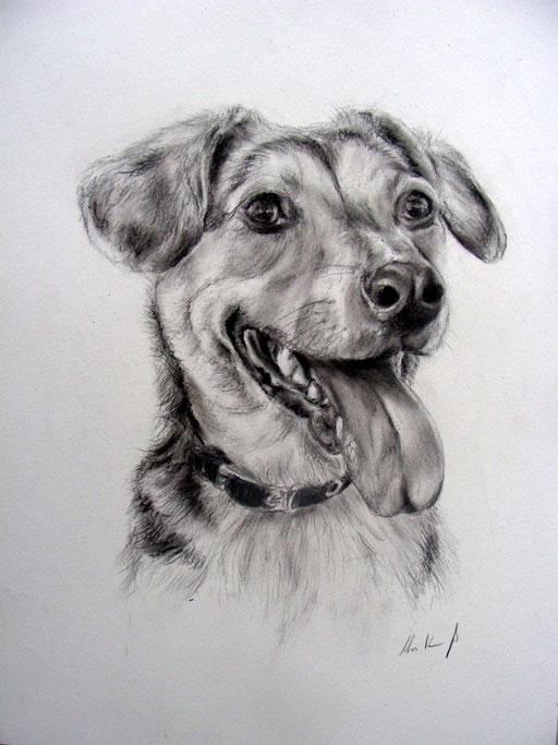 Hundezeichnung Kopfportrait