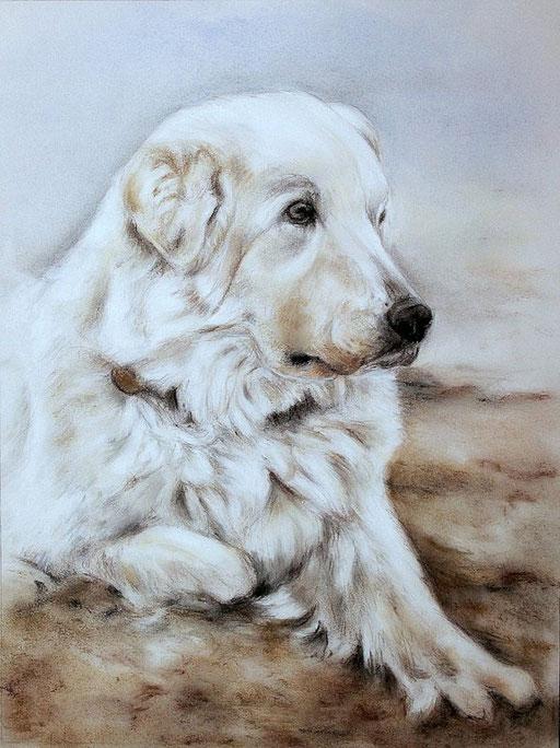 Hundeportrait eines älteren Golden Retriever mit Pastellfarben gezeichnet