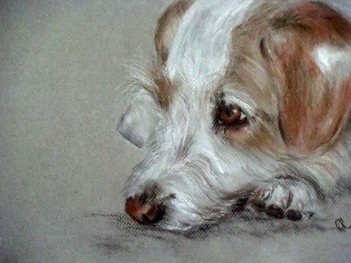 liebenswerte Hundedame, Hundezeichnung, verstorbene Hündin aus dem Tierschtz