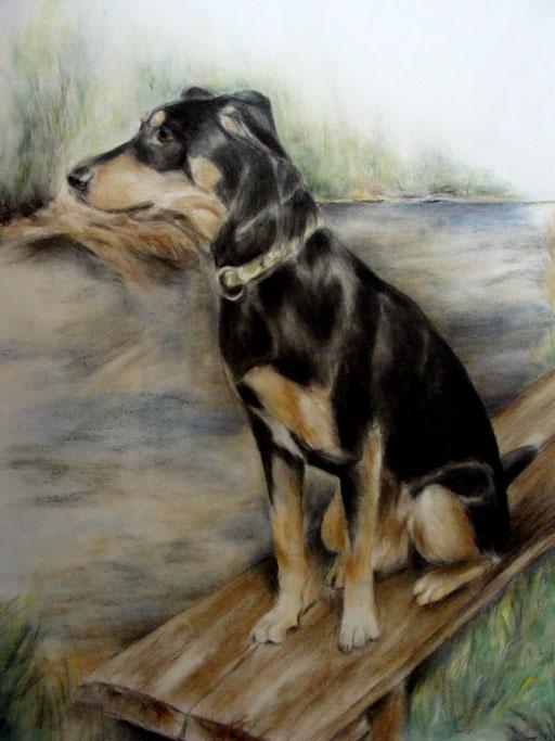 Hundeportrait mit Hintergrund
