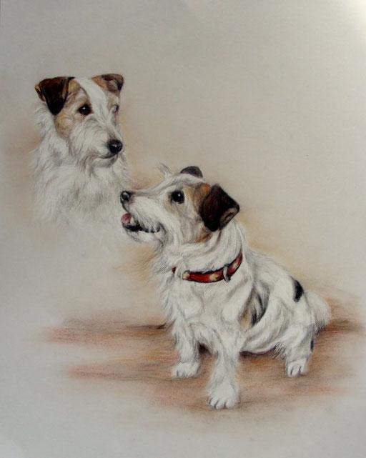 Hundeportrait, Kopf-und Körperportrait