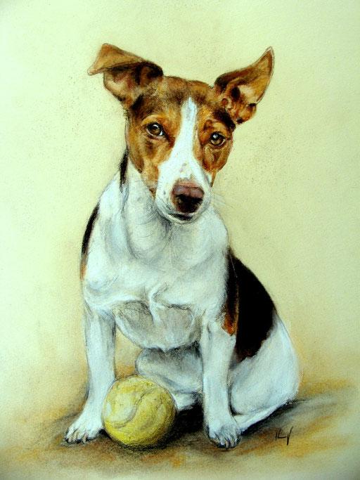 Jack Russel Terrier Pastellzeichnug