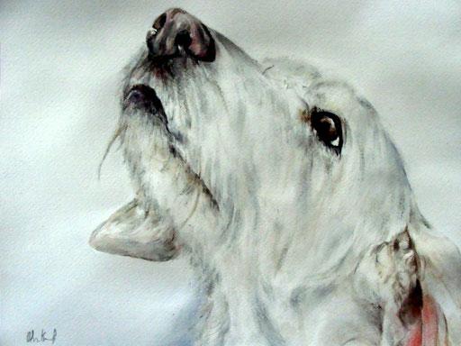 Hundeportrait Aquarell, verstorbene Hündin aus dem Tierschutz
