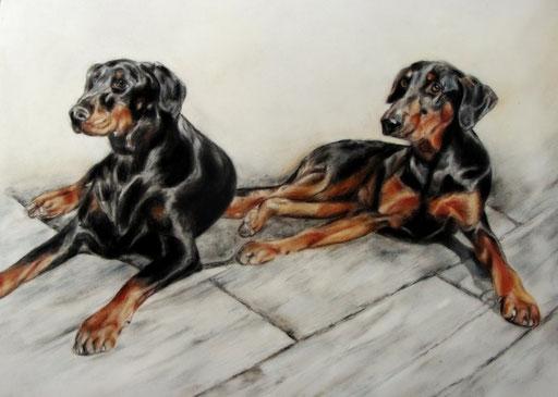 Hundeportraits Dobermänner