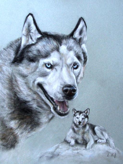 Hundeportrait Husky