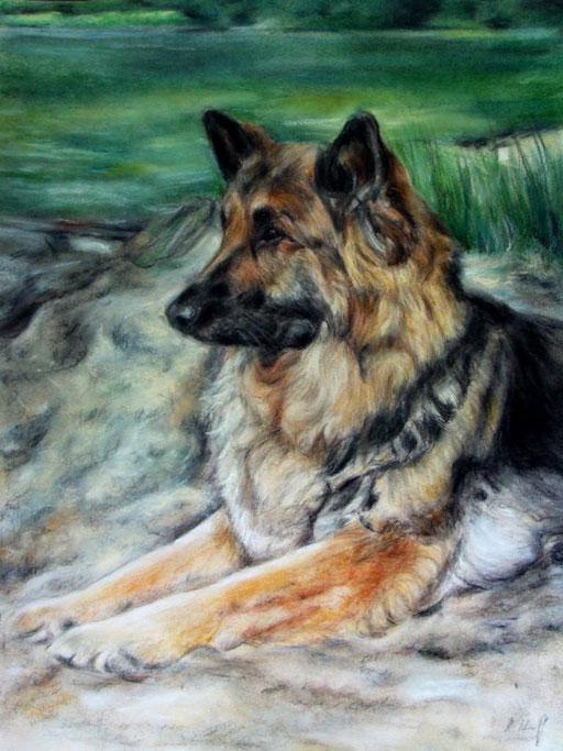 Schäferhund mit Hintergrund gezeichnet