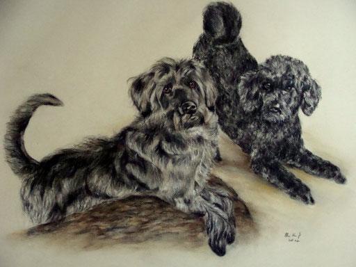 Hundportraits zweier Hundefreunde