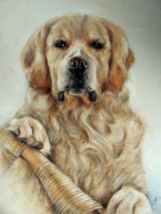 Golden Retriever, Hundeportrait