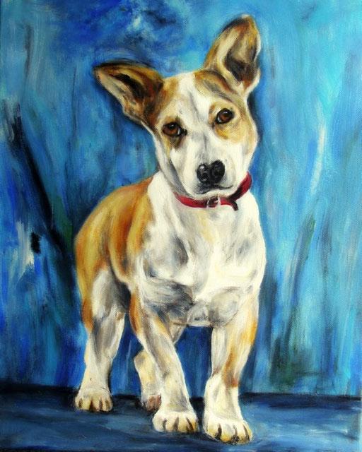 Hundeportrait Mischlingshund (Vorlage aus der Tiervermittlung)