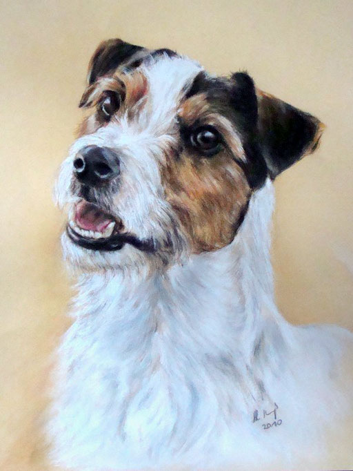 Hund gezeichnet, Parson Jack Russell, Pastellkreide
