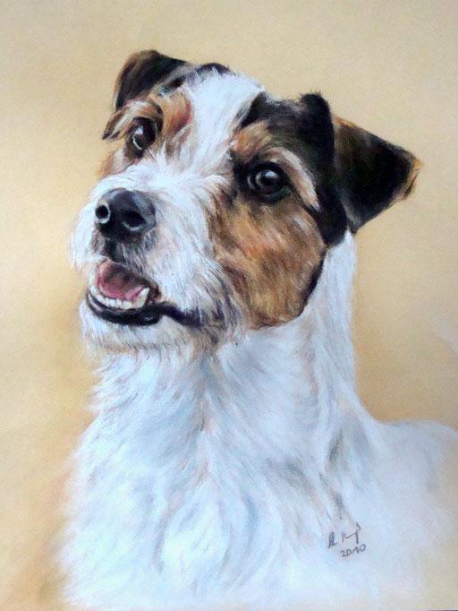 Hundportrait gezeichnet, Parson Jack Russell, Pastellkreide