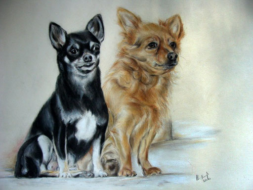 Hundeportraits Chihuahuas