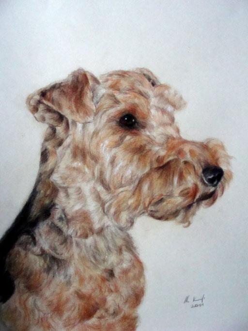 Kopfportrait Hund