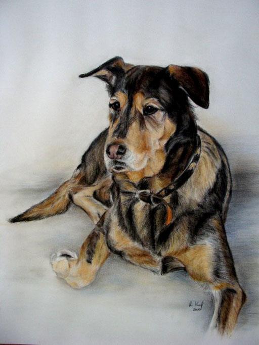 großer Mischlingshund mit Pastellkreide gezeichnet