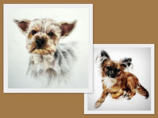 kleine Chihuahuas im Kleinformat gemalt