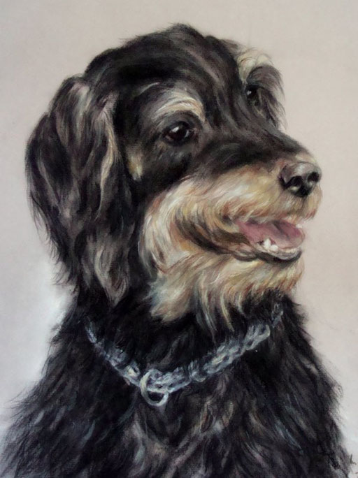 Jagdhundmischling Hundeportrait