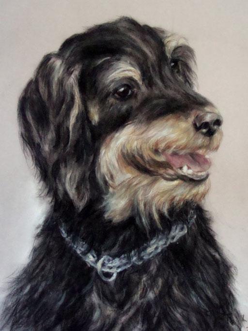 Jagdhundmischling Hundeportrait, verstorbener Rüde aus dem Tierschtz