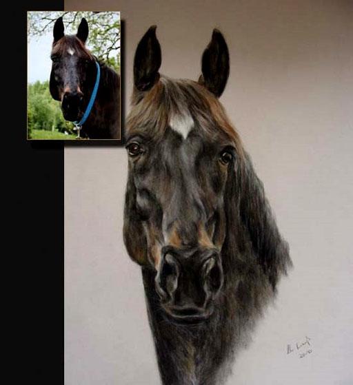 Pferdeportrait mit Fotovorlage, Pastellkreide